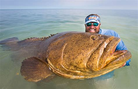 fish grouper goliath groper fuck