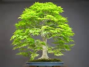 get cheap indoor bonsai tree aliexpress alibaba
