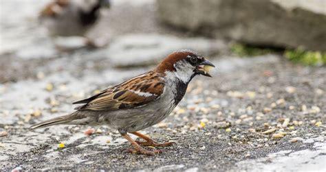 feeding birdsfeeding birds archives the bird house