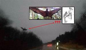Megabat or 'Jersey Devil' Photographed in Pennsylvania ...