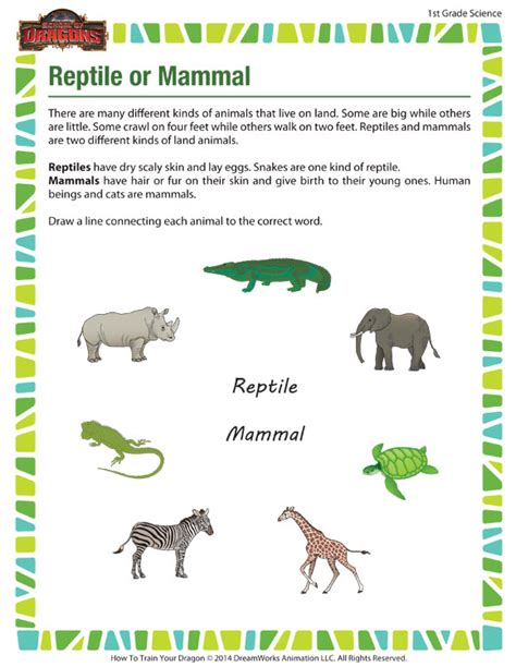 reptile or mammal view 1st grade science worksheet sod