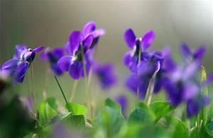 Purple Spring Wallpaper