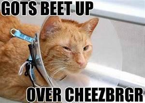 Hilarious Cat With Gun Quotes. QuotesGram