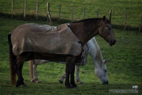 fliegendecke fuers pferd ja oder nein pferdebiester