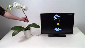 """""""Botanicus Interacticus"""" ou comment remplacer votre souris ..."""