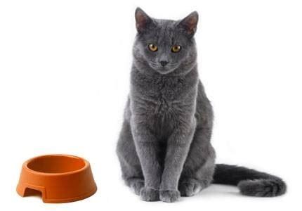 alimenti cani on line cibo gatti on line cibo gatti cibo gatti on line consigli