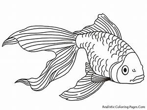 Fins clipart fish drawing - Pencil and in color fins ...