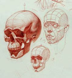 Best Drawing Head From Different Angle Images