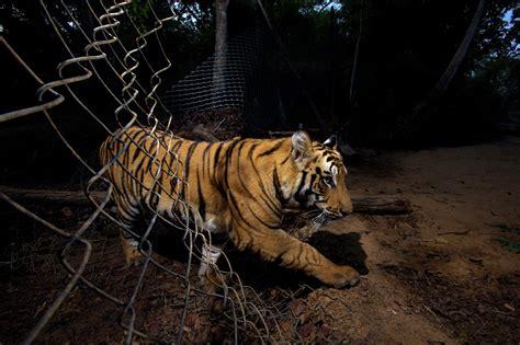extreme animal portraits wildlife photographer