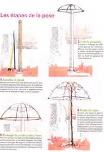 how to parasol a vine comment conduire une vigne en parasol use a weeping standard