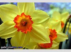Ostern gaidaphotos Fotos und Bilder