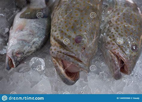 grouper fillet fish fresh healthy sea