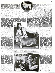 Pedigree Dogs Exposed - The Blog: Thirty years ago, how ...