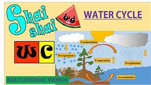 Water Cycle Diorama For Kids With Shai Shai Wc