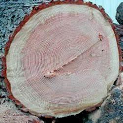 le bois les bois bruts constructeurs de fuste maisons With exposition d une maison 3 realisations douglas bois les charpentiers constructeurs