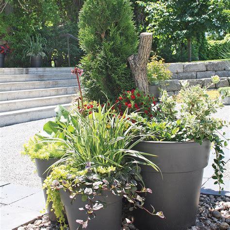 arbustes  vivaces en pot comment faire actualites