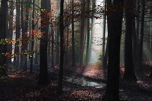 Landscape, Nature, Forest, Mist, Path, Leaves, Fall, Sun, Rays, Puddle, Trees, Wallpapers, Hd
