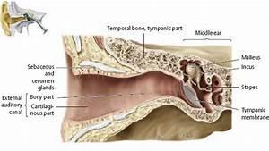 Temporal Bone  U0026 Ear