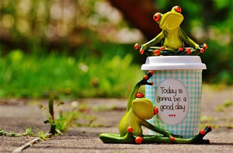 vertical towel free photo beautiful day frog coffee free image
