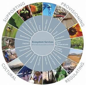 The Millennium Ecosystem Assessment  Mea  Organizes
