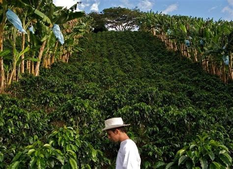 Colombian Supremo Coffee Beans Organic Fresh Roasted Whole Beans 2   1 Pound Bag   eBay