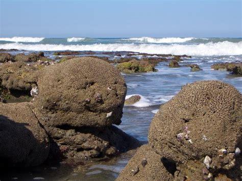 reef is alive don t walk on it billede af bathtub reef