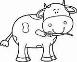 Cow Coloring Via sketch template