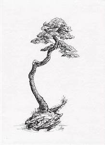 bonsai pine by frederica marshall s u m i e With wiring pine bonsai