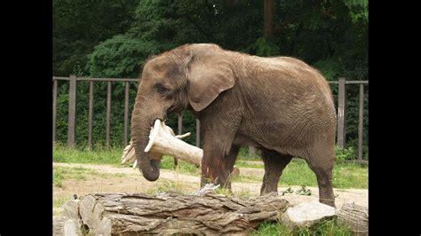 lustiges kinderlied tiere im zoo tierpark tiergehege