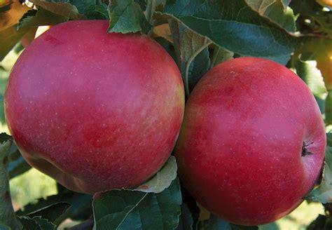 chambres d hôtes à provins provins journée jus de pomme 22 09 2012 la pépinière