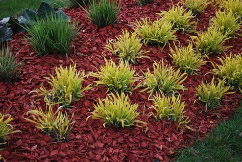 when to mulch garden dyed mulch vs regular mulch using colored mulch in gardens
