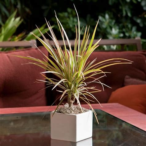 colorful indoor plants low light indoor plants low light house plants www freshinterior me