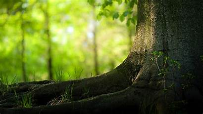 Tree Trees Backgrounds Desktop Natural Wallpapers Nature