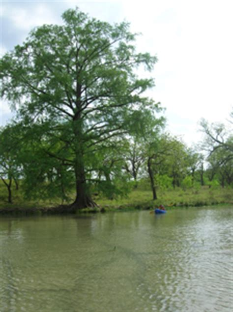 Tpwd State Tx Us Boat Renewal by Tpwd Seguin Paddling Trail Lake Nolte Meadow Lake
