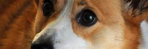 Лечение папиллом глаза у собаки