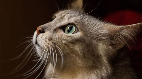Offering both pet insurance and pet protection services (microchipping and online services to help find lost pets), 24petwatch's insurance programs are open to dogs from 8 weeks to 10 years old and cats from 8 weeks up to 12 years of age. Best Pet Insurance: Here's Why It's Smarter (And Cheaper ...