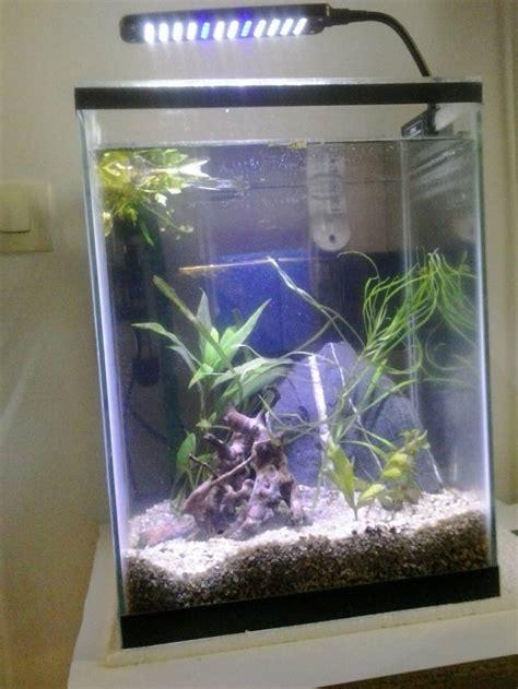 photos d aquarium page 95