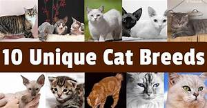 Fascinating Cat Breeds That Will Steal Your Heart