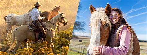 livestock horses pet classified pets