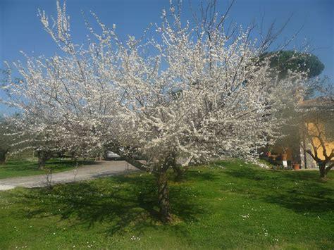 giardino marzo pin di giuseppina ceraso su fiori agrumi natura