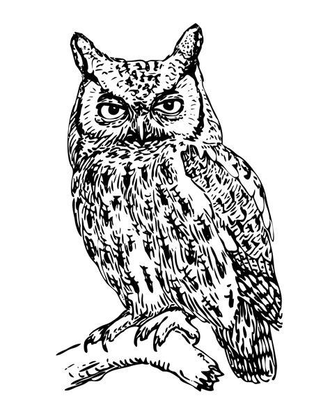 Owl Illustration Clipart Free Stock Photo - Public Domain