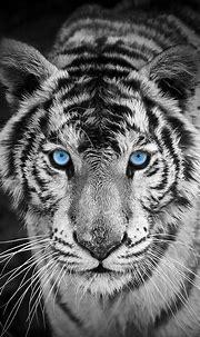 White-Tiger-iPhone-Wallpaper   Tiger wallpaper, Animals ...
