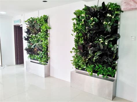 indoor vertical garden indoor vertical garden for office in the strand lush eco