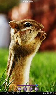 Funny Animals Free Wallpapers HD 3D Free Android Theme ...
