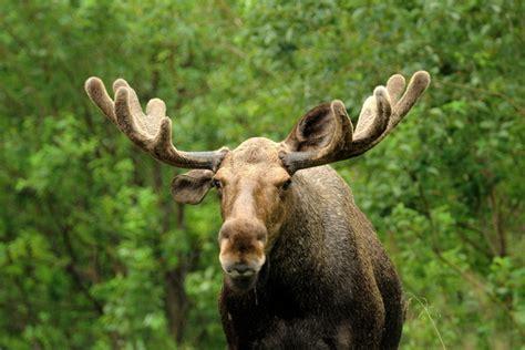【まとめ】カナダの動物といえば?バンクーバーで見れる動物も紹介 | Ari-Canada