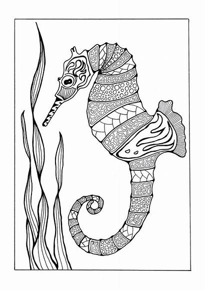 Coloring Pages Adults Seahorse Adult Printable Sea