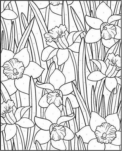 Numbers Paint Number Coloring Pages Adult Designs