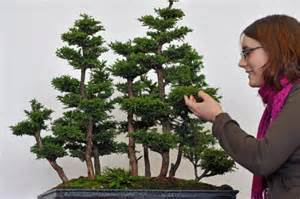 Bonsai Garten Hamburg : gute frage wie entstehen bonsaib ume wissen ~ Lizthompson.info Haus und Dekorationen