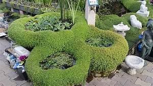 Graskarpfen Im Gartenteich : gartenteich braun gmbh pflanzk rbe und zubeh r ~ Frokenaadalensverden.com Haus und Dekorationen