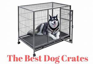 dog crates purple dog crates collapsible dog crate With best dog crates for puppies